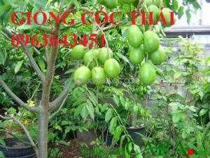 Chuyên cây giống cóc thái, cây giống cóc bao tử, cây giống cóc ta chuẩn, giá tốt nhất, giao cây toàn quốc