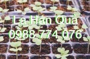 Giống cây La Hán Quả