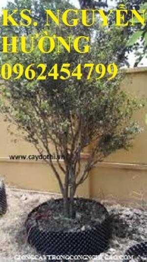 Cung cấp cây giống nho thân gỗ, trung tâm cung cấp cây giống chất lượng cho năng suất cao - giao cây toàn quốc
