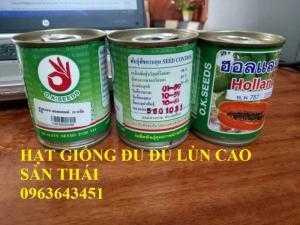 Cung cấp cây giống, hạt giống đu đủ lùn cao sản Thái Lan, đu đủ lùn siêu lùn siêu quả, đu đủ lùn Thái ruột vàng