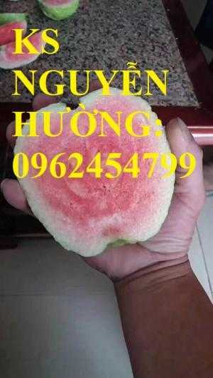 Cung cấp cây giống ổi rubi ruột đỏ không hạt Đài Loan, ổi rubi không hạt, ổi Đài Loan