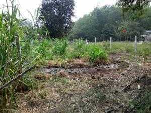 Đất 8m x 36m đường nông thôn 5m thuộc xã Phú...