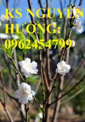 Cung cấp cây giống đào bạch, cây giống đào trắng, địa chỉ cung cấp cây chất lượng - giao cây toàn quốc