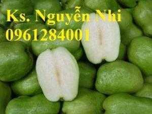 Bán cây giống ổi không hạt, ổi xá lị, giống cây ổi, cây giống chất lượng cao, giao hàng toàn quốc