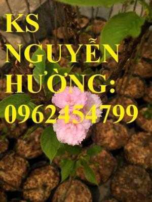 Địa chỉ chuyên cung cấp cây giống hoa anh đào, cây hoa anh đào Nhật Bản, giao cây toàn quốc