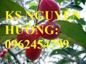 Địa chỉ cung cấp cây giống nhót ngọt, cây ngót, cây nhót mỹ, giao cây toàn quốc