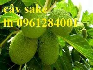 Cây sa kê, cung cấp cây giống sa kê chiết, sa kê ghép, sake, cây giống chất lượng cao