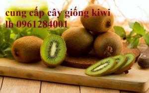 Cây kiwi, cây ăn quả mới, cây giống kiwi, cây giống chất lượng, giao hàng toàn quốc