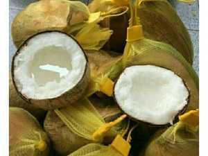 Dừa Sáp loại 3 giá rẻ