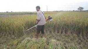 Máy cắt lúa cầm tay tăng năng suất cho bà con giá rẻ - giao hàng trên toàn quốc.