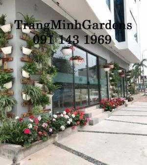 Dịch vụ tư vấn, cung cấp, chăm sóc hoa cây cảnh tại nhà (hoa hồng, hoa thảm, cây xanh...)