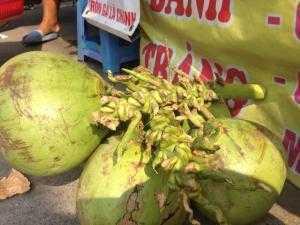 Bán dừa tươi Trái Lớn