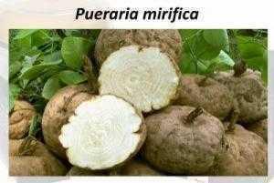Cao khô sâm tố nữ Pueraria mirifica