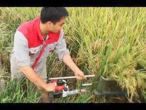 Máy gặt lúa thủ công năng suất 1,3 sào/30p sử dụng dễ dàng,gọn nhẹ.