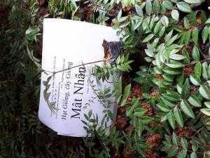 Bán cây giống mật nhân Dược liệu quý