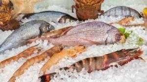 Cung cấp và lắp đặt kho lạnh thủy hải sản tại các tỉnh miền Nam và miền Trung