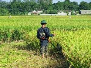 Máy gặt lúa thủ công đa năng , tăng năng suất thu hoạch của bà con nông dân giá rẻ