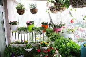 Chậu nhựa PP kẹp lan can trồng hoa, chậu kẹp lan can trồng rau sạch