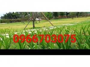 Nhận thi công trồng cỏ sân vườn