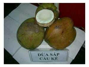 Dừa Sáp Bi Đặc Ruột Cầu Kè