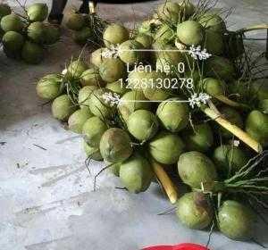 Chuyên cung cấp dừa xiêm, dừa khô Bến Tre