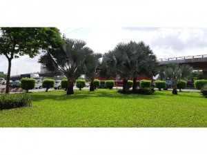 Cây cảnh trang trí sân vườn