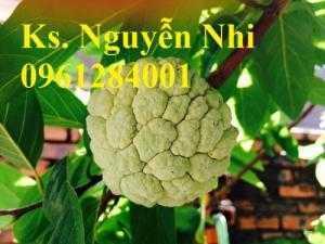 Chuyên cung cấp giống cây na dai, na ta, mãng cầu dai, cây giống chất lượng cao