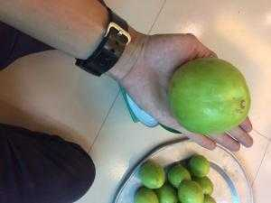 Giống cây táo T5