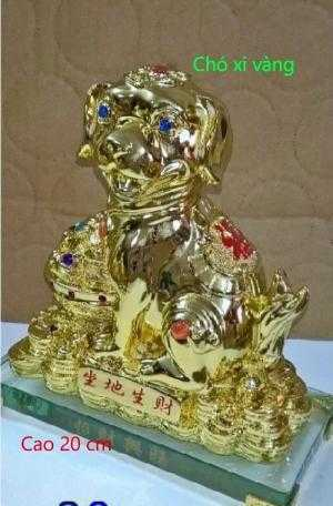 Chó xi vàng (con giáp lớn)