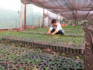 Lưới che nắng Việt Nam che nắng vườn ươm cây trồng, che mái hiên nhà,....