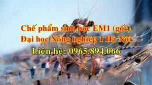 Sủ dụng chế phẩm sinh học EM1 - EM gốc chuyên cho nuôi tôm cá