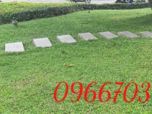 Cỏ nhung cỏ thảm cỏ  trang trí sân vườn