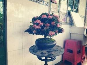 Trang hồng ra écphấn