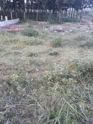 Đất thổ cư 12m x 17m khu dân cư xã Tân An Hội, Củ Chi