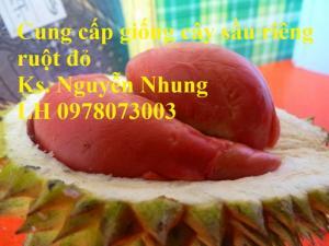 Chuyên cung cấp giống cây sầu riêng ruột đỏ nhập khẩu chất lượng cao