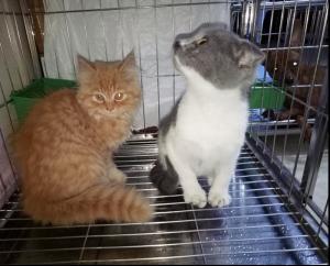 Nhận Trông Giữ - Chăm Sóc Thú Cưng Chó Mèo