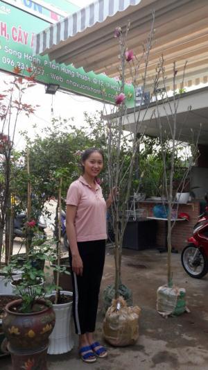 Nhanh Tay sở hữu hoa mộc lan đẹp đến xiêu lòng