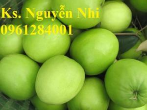 Táo T5 - cây giống mới, cây trồng kinh tế mới, cây giống chất lượng cao