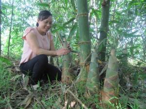 Tre bát độ cây giống, thích hợp với mọi môi trường khí hậu, thích hợp trồng kinh tế.