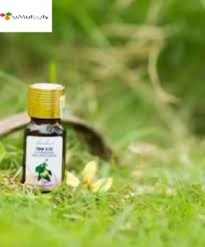 Tinh dầu bạch đàn chanh 10ml