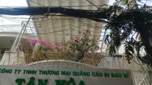 Nguyên căn 4x25mLê Văn Sỹ, Tân Bình