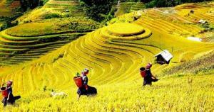 Gạo séng cù vùng cao