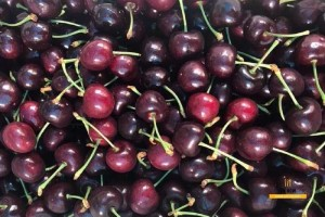 Cherry New Zealand size 28-30mm