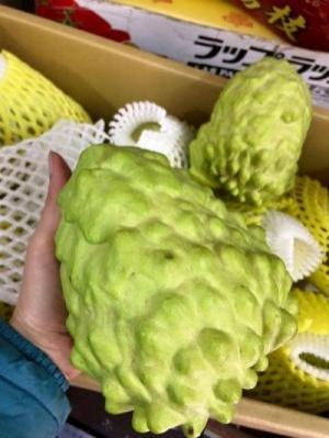 Bán giống cây Na Bở Đài Loan chuẩn giống nhập khẩu