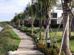 Dừa xiêm lùn Bến tre - Cây giống dừa xiêm