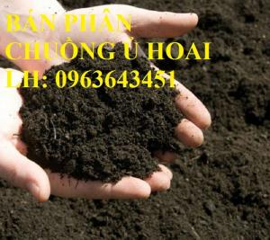 Chuyên cung cấp phân bón hữu cơ, phân chuồng ủ hoai, phân gia súc ủ hoai mục bằng chế phẩm sinh học