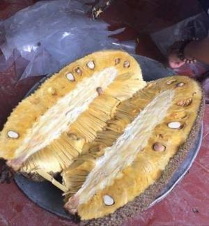 Cung cấp giống mít trái dài chuẩn nguồn gốc Malai