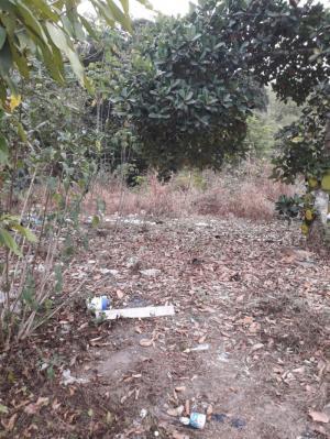 Đất  24m X 60m Đường Nhựa Ấp Cây Trắc Xã Phú Hòa Đông ,Củ Chi.