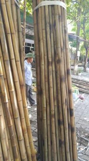Mua cây trúc ở đâu tại Hà Nội, địa chỉ mua tre trúc tại Hà Nội