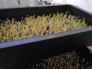 Khay nhựa trồng rau thông minh